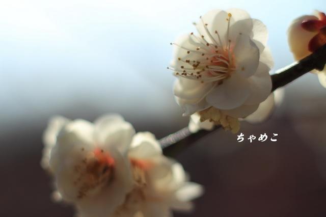 DPP_6984.JPG